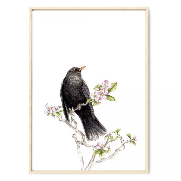 JANINE SOMMER - AMSEL IM APFELBAUM Zeichnung Poster Kunstdruck A4