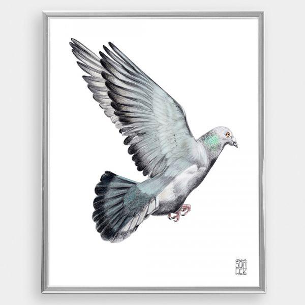 JANINE SOMMER - TAUBE Zeichnung, Poster, Kunstdruck A4