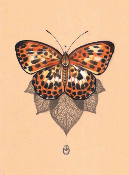 JESSICA MACH- Sunrise Butterfly