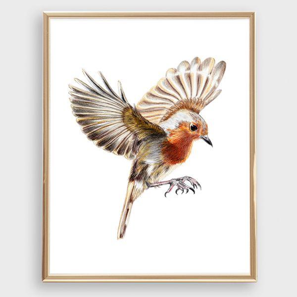 ROTKEHLCHEN IM FLUG Zeichnung, Poster, Kunstdruck A4