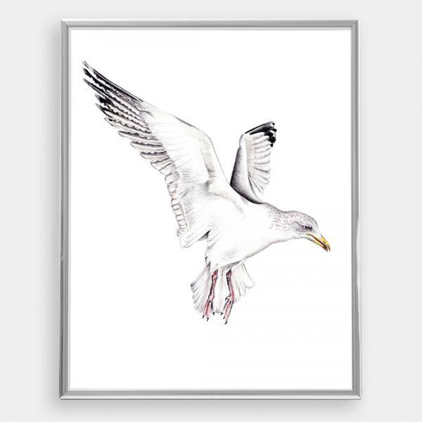 JANINE SOMMER - MÖWE Zeichnung, Poster, Kunstdruck A4